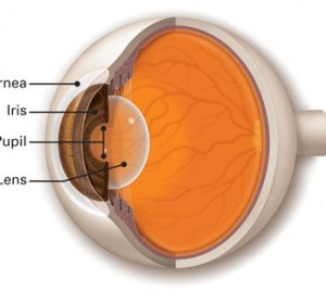 Cornea, Ocular Surface and Dry Eye Services