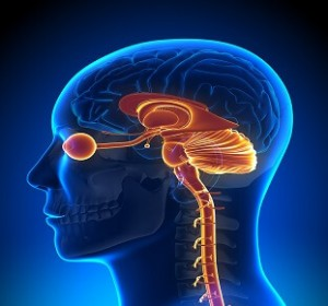 Neuro-Ophthalmology Services